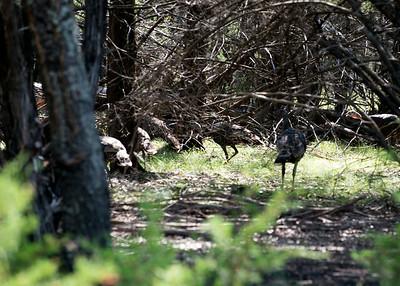 Hunting 08-29-2014