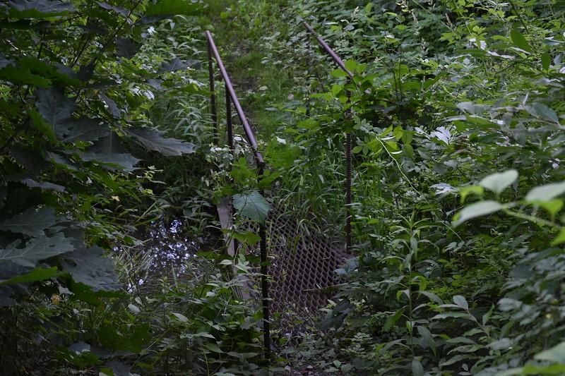 2019_06_26 CS Trail (62).JPG
