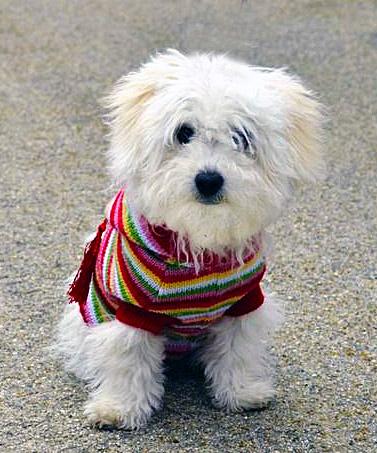 IMAGE: http://rpcrowe.smugmug.com/photos/i-drDkzsk/0/L/i-drDkzsk-L.jpg