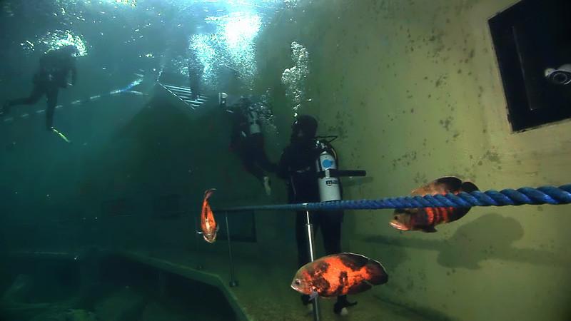 Underwater Walk Edit 45secs.00_00_58_16.Still072.jpg