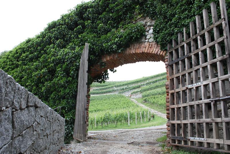 Bressanone- vinyard.JPG