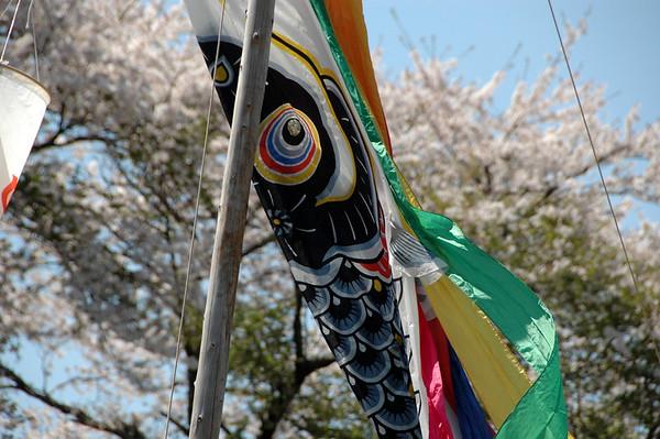 KOINOBORI & FUREAI - 11 APRIL, 2009