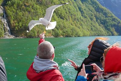 Fjord_trip