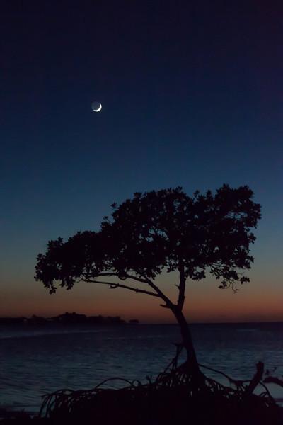 grassy key mangrove-4-2.jpg
