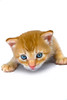 Close up of cute kitten with beautiful eyes. Photography fine art photo prints print photos photograph photographs image images artwork.