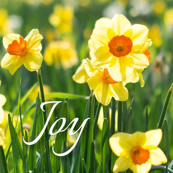 48_Galatians5-22-23_NJ_Fruit of the Spirit_4-23-17_2-Joy.jpg