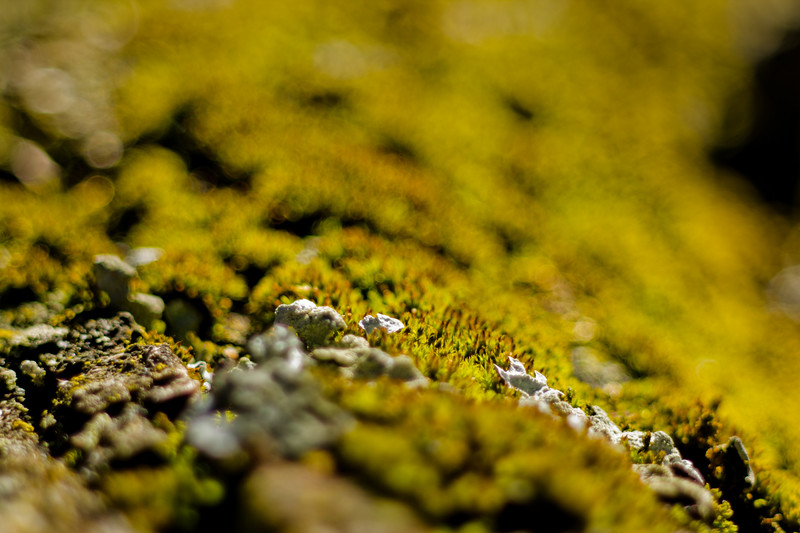 Moss on the Tree 8