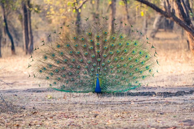 India_April_2019-10.jpg