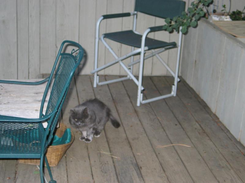 mama kitty.JPG