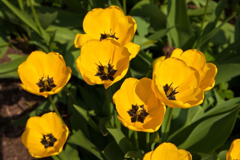 SpringFlowers-38.jpg