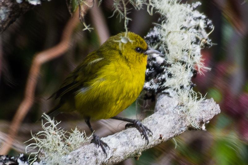 19-Sept Hawaii Birds-5481.JPG
