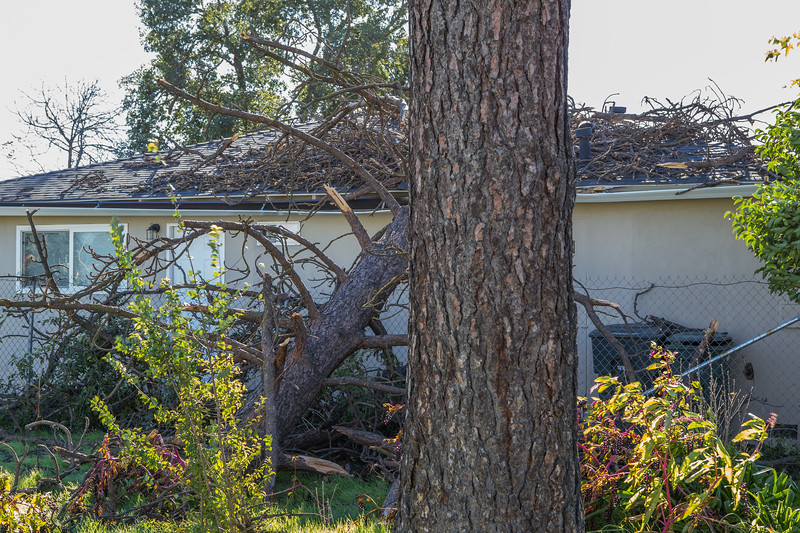 5671 Wallace Ave - Tree 1030am 12 16 2017 Extremly Windy Conditions-13.jpg