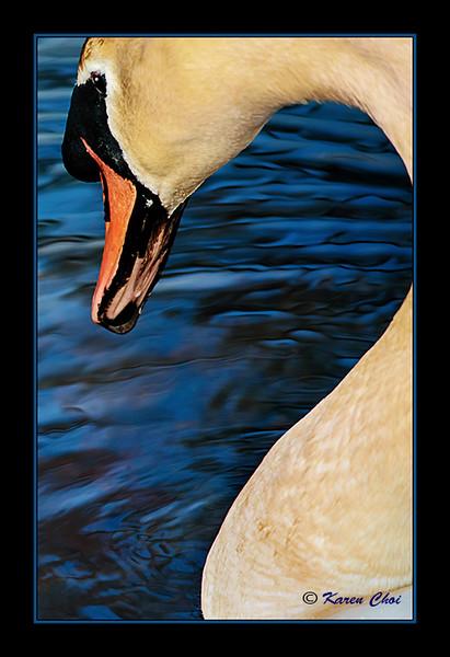 Swan 5 sm.jpg