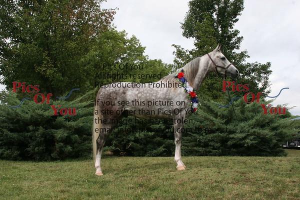 Ladamas Arabians