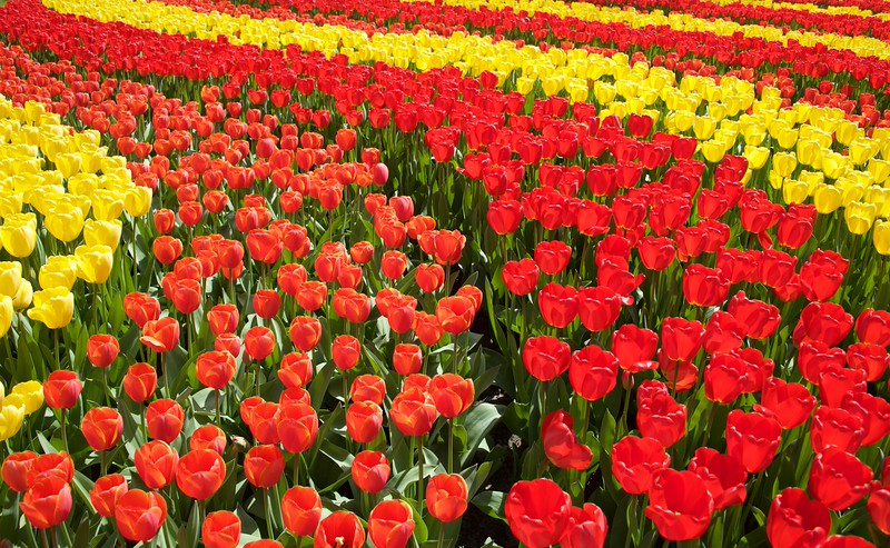 20150424 The Netherlands, Keukenhof Garden
