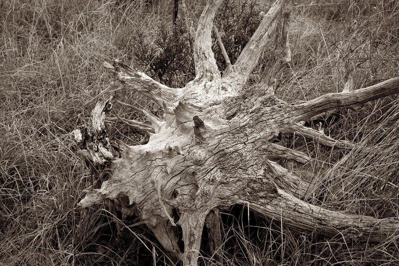 C Photo Lenswork 2007-11-17 Wood Study 2994.jpg