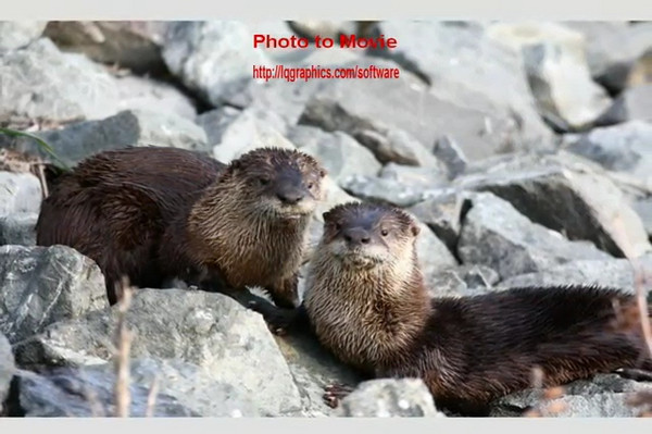otters 3.mov