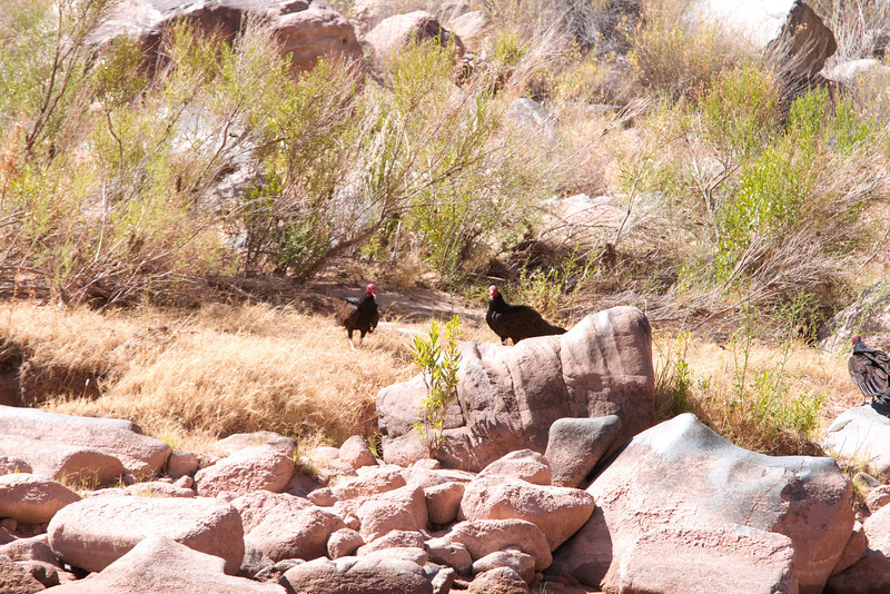 2014_Grand_Canyon_WHDW2_7D 87