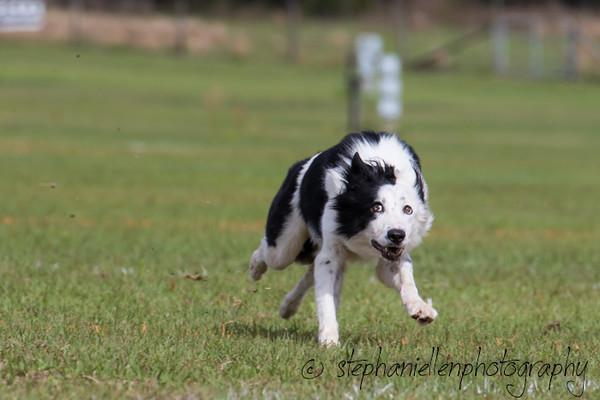 _MG_2780Up_dog_International_2016_StephaniellenPhotography.jpg