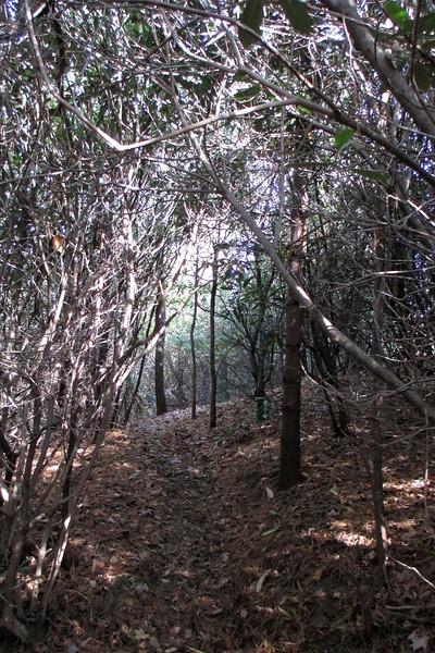 Little Green Mountain - 4,000'