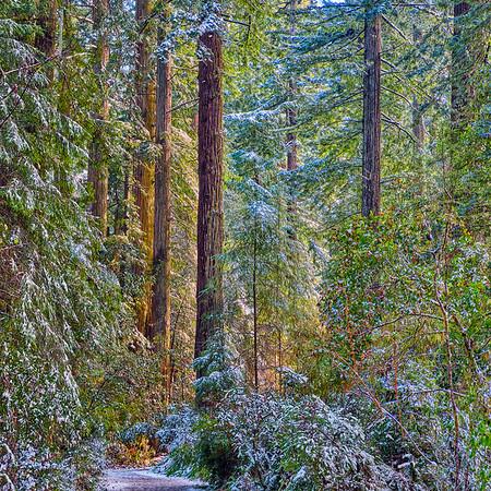 Lady Bird Johnson Trail