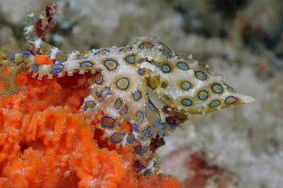 2009 Raja Ampat, Indonesisa: Fish and more