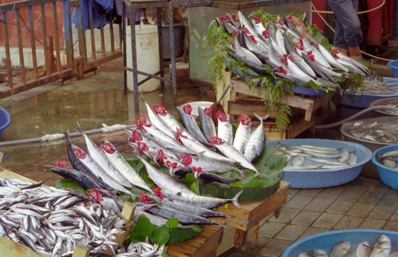 Fish Market - Istanbul, Turkey