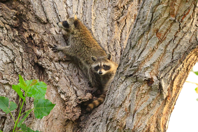 Two in the Tree 2