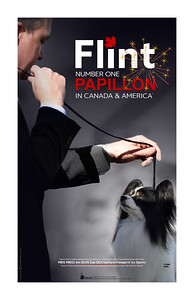 Papillon National Specialty Ads