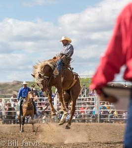 2014 Miles City Bucking Horse Sale