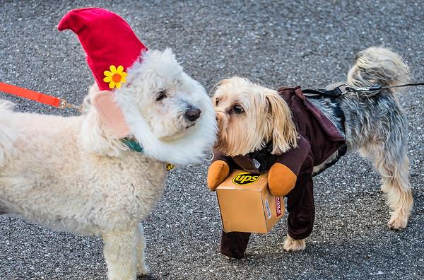 Ibis Halloween Doggie Walk - Oct 2019