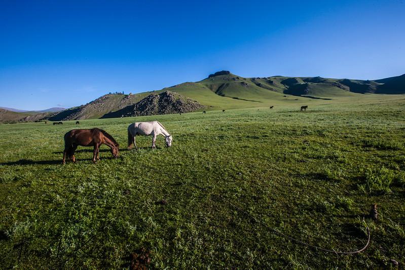 Horse. Central Mongolia.
