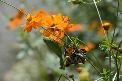 Gindai Botanical Garden/神代植物公園