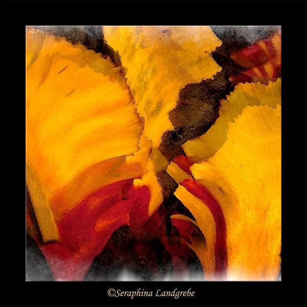 Swan Tulips #1 Smugecrop b.jpg