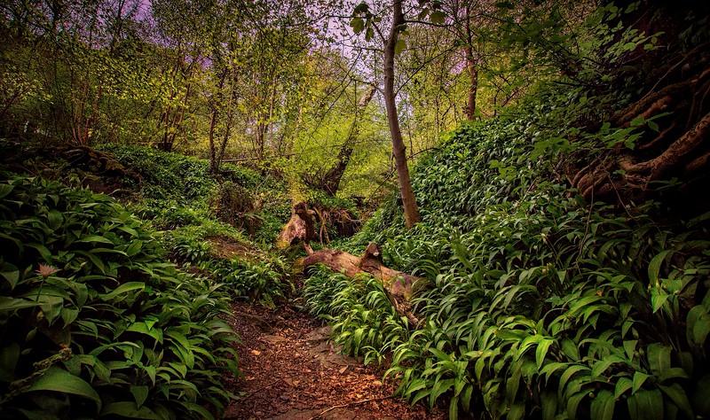 Forest Shadows-024.jpg
