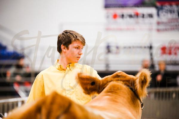 Ring: Market Steers