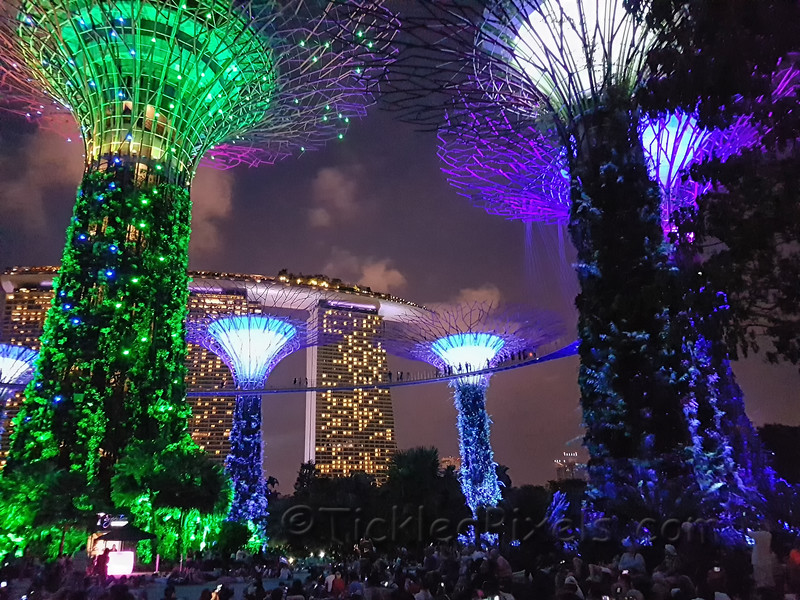 Skyway and Supertree Grove