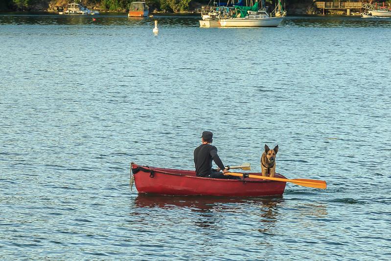 Man and dog paddling-2331.jpg