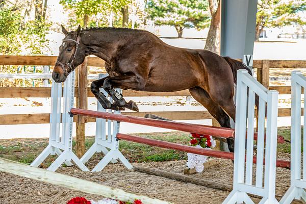 Horse 3 - Jenn O'Neil