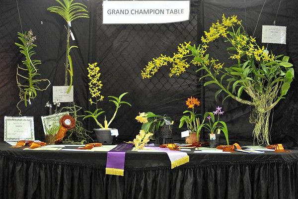 Orchid Spectacular 2017