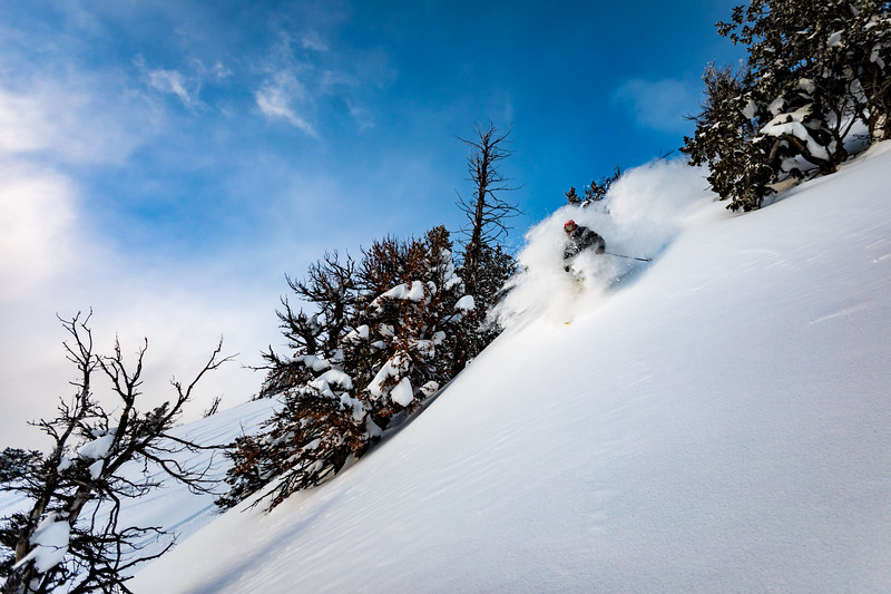 Matt Sterbenz skiing down the trees on Mt. Glory. Checkerspot Road Trip.