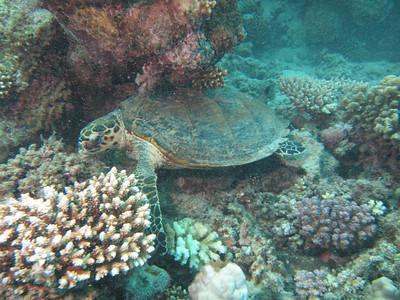 20120530 Dive, Shiliniat