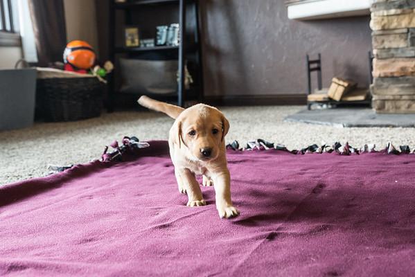 Peltz Pups