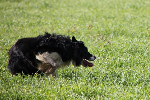 December 2010 Dogs