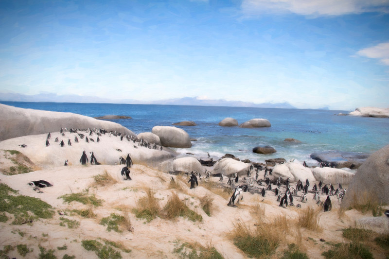 IMG_9973penguins.jpg