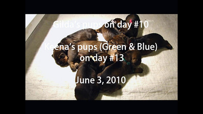 Q Green pup on day 13