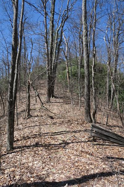 Shelton Pisgah Trail - 4,250'