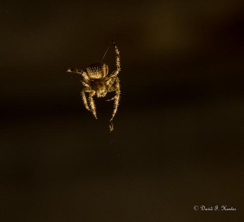 Night Spider September 2015