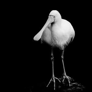 20150621 - Perth Zoo