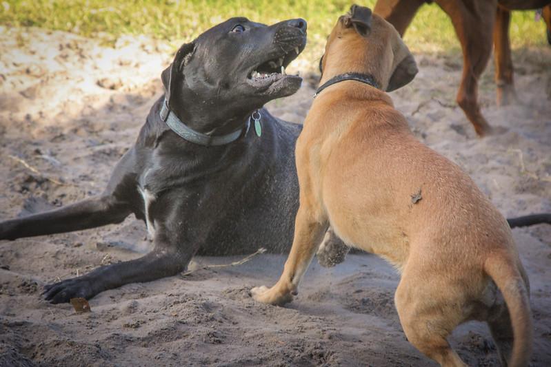 DogPark110313-3404